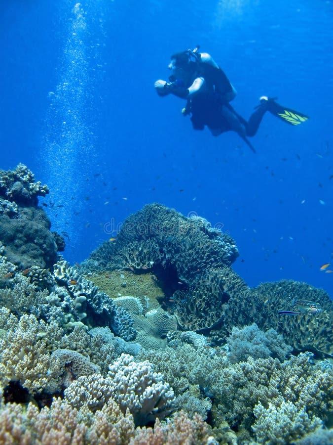niebieski nurkowanie zdjęcia stock