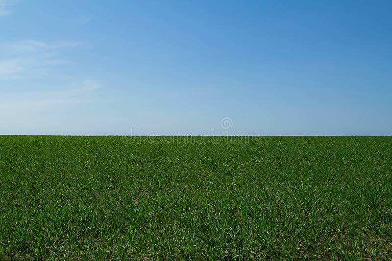 niebieski pola zielone niebo obraz stock