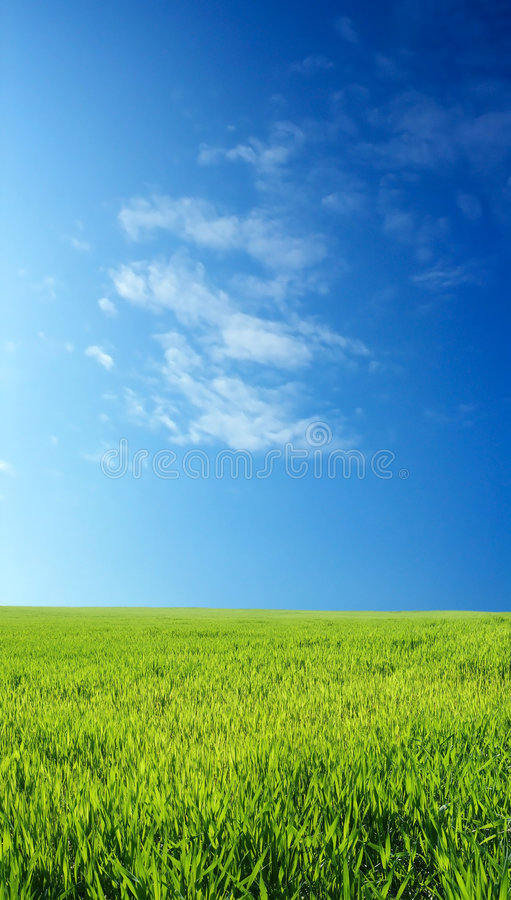 niebieski pole przez niebo pszenicą zdjęcia stock