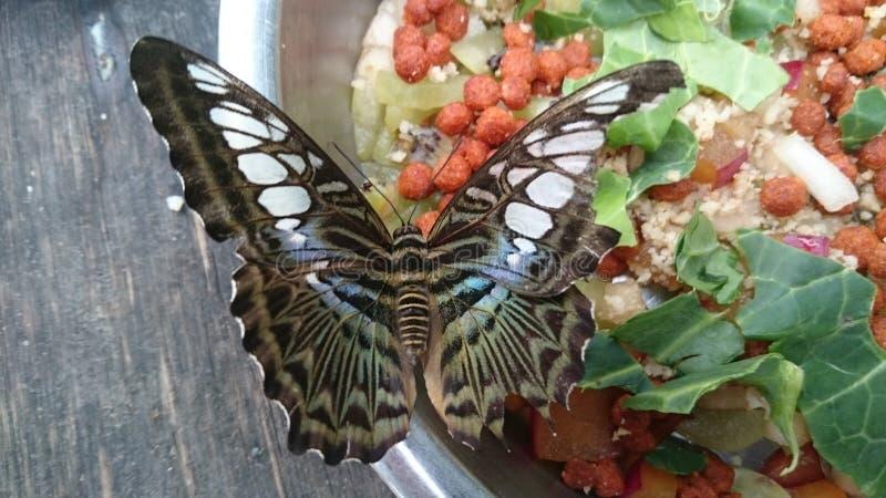niebieski szczypce motyla zdjęcie royalty free