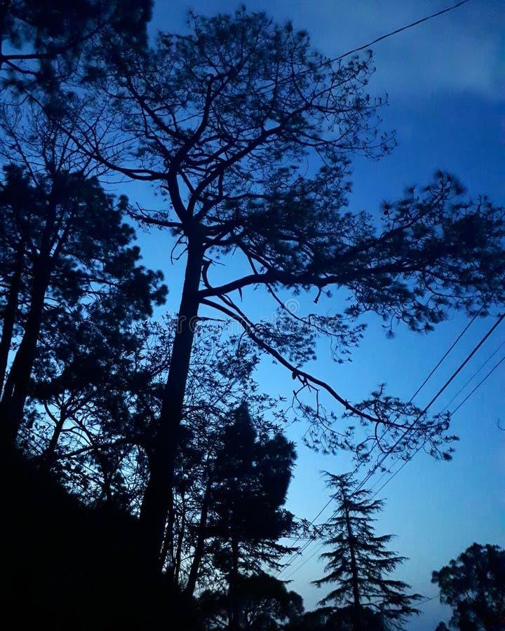 Niebieskich nieb drzewa obraz stock