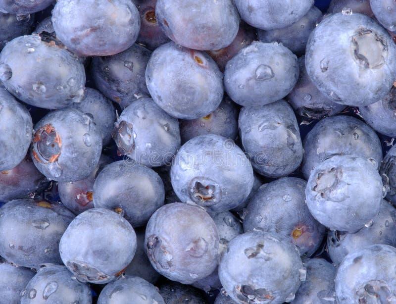 Download Niebieskie jagody poziome obraz stock. Obraz złożonej z desery - 131887