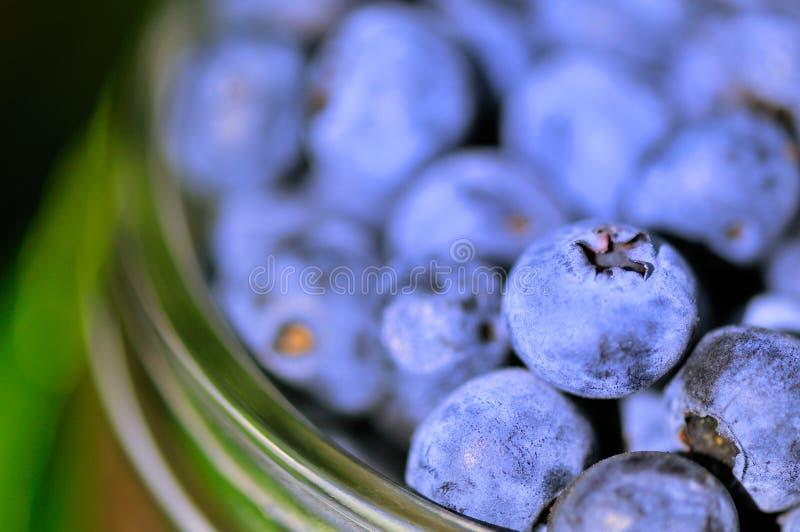 niebieskie jagody szkła fotografia stock