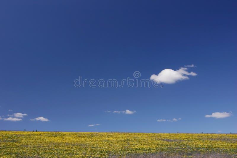 niebieskie niebo żółty pola zdjęcie royalty free