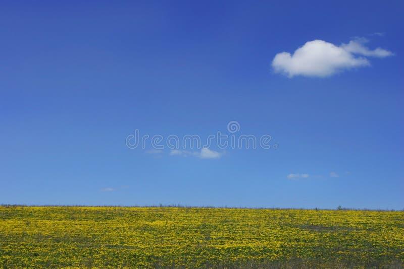 niebieskie niebo żółty pola obraz stock