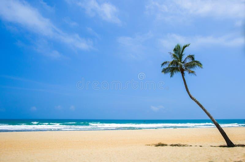 Niebieskie niebo, biała piasek plaża, morze i kokosowy drzewko palmowe, obrazy royalty free