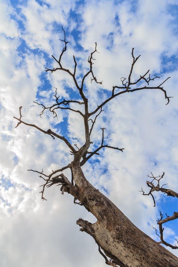 niebieskie niebo drewna nie żyje zdjęcia stock