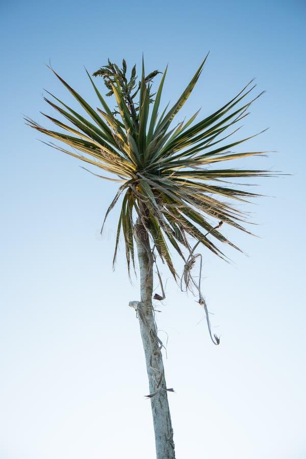niebieskie niebo drzewo palm zdjęcie royalty free