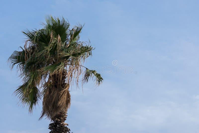 niebieskie niebo drzewo palm obraz royalty free