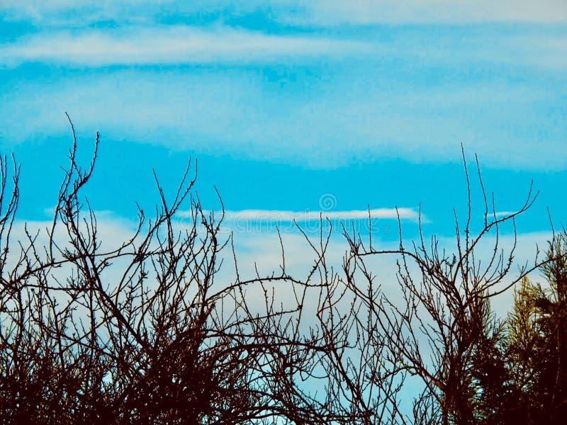 Niebieskie Niebo gałąź fotografia stock