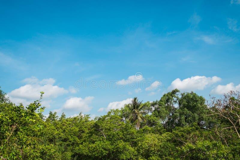 Niebieskie niebo i chmury nad luksusowym lasem, Sri Nakhon Khuan Khan park, uderzenie Krachao obraz stock