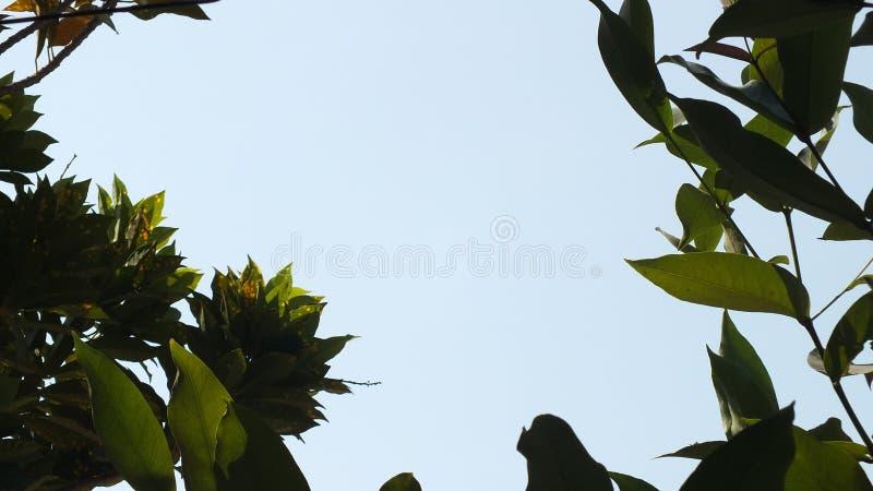 Niebieskie niebo mi?dzy drzewami zdjęcie royalty free