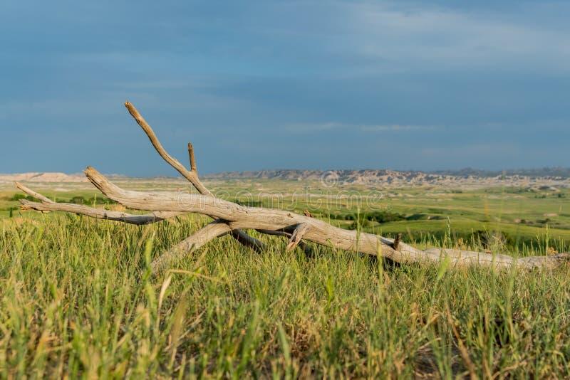 Niebieskie Niebo Nad kawałkiem Nieżywy drewno w polu zdjęcia royalty free