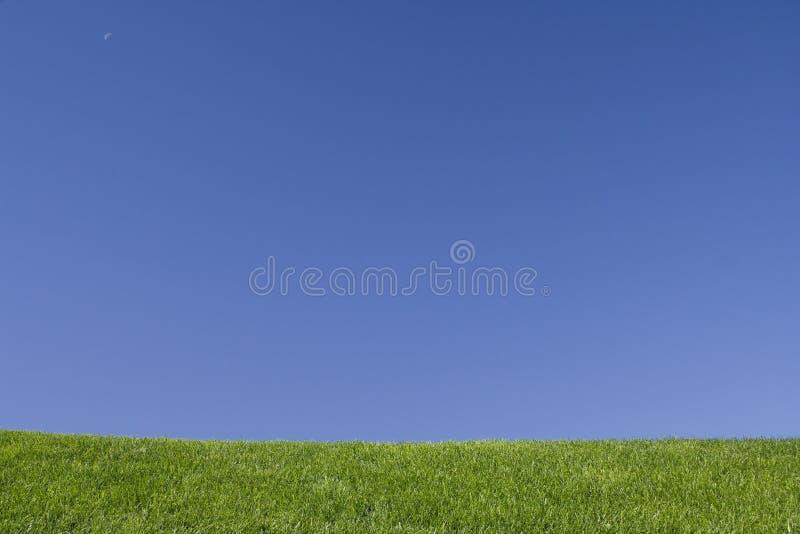 niebieskie niebo trawy zdjęcia stock