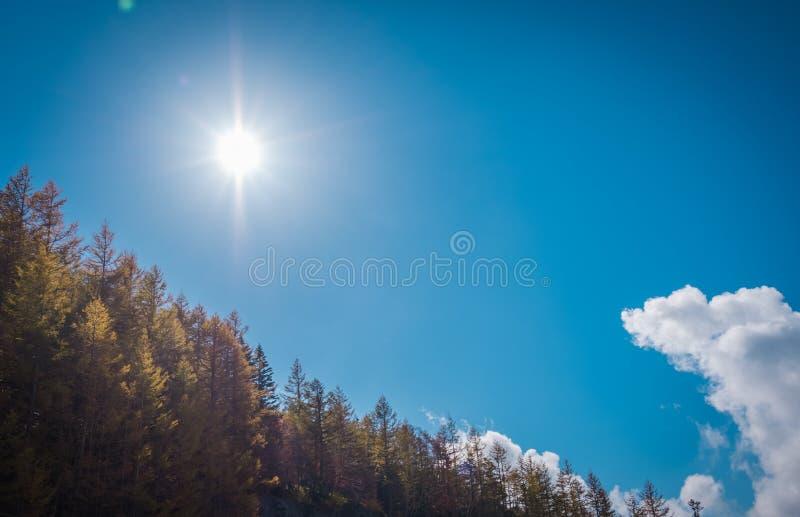 Niebieskie niebo widok z słońcem, chmurą i jesieni drzewem, zdjęcie stock