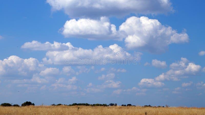 Niebieskie niebo z bielem chmurnieje nad żółtym polem obraz stock