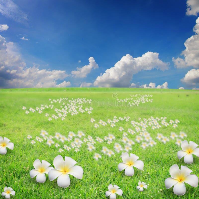 Niebieskie niebo z chmurami i kwiatami na trawie fotografia stock