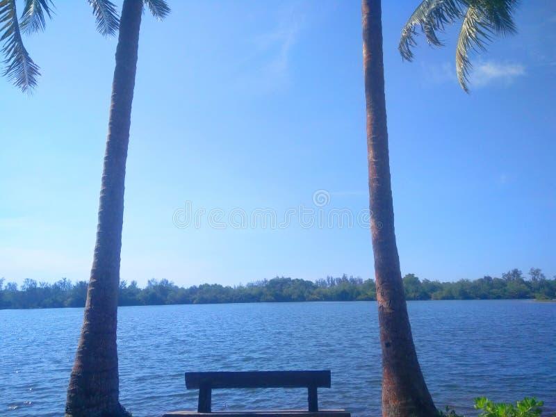 Niebieskie niebo z kokosowym drzewem fotografia stock