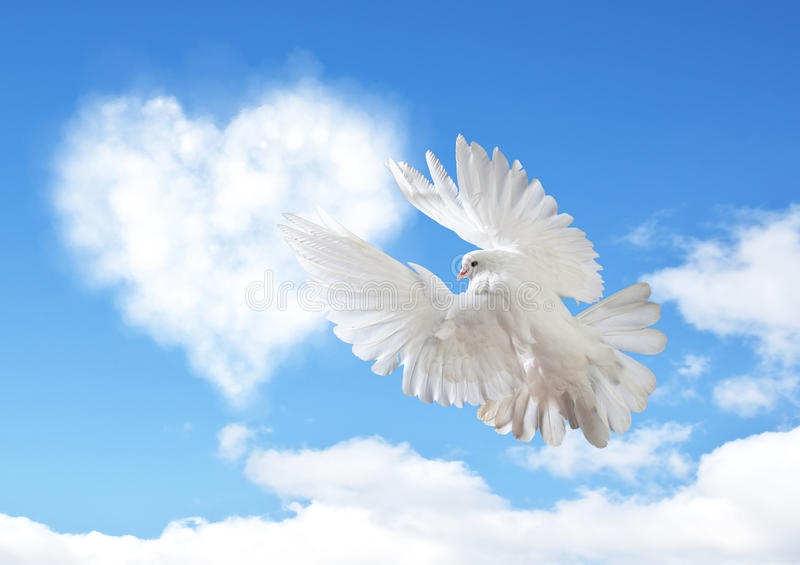 Niebieskie niebo z serce kształta gołąbką i chmurami fotografia royalty free