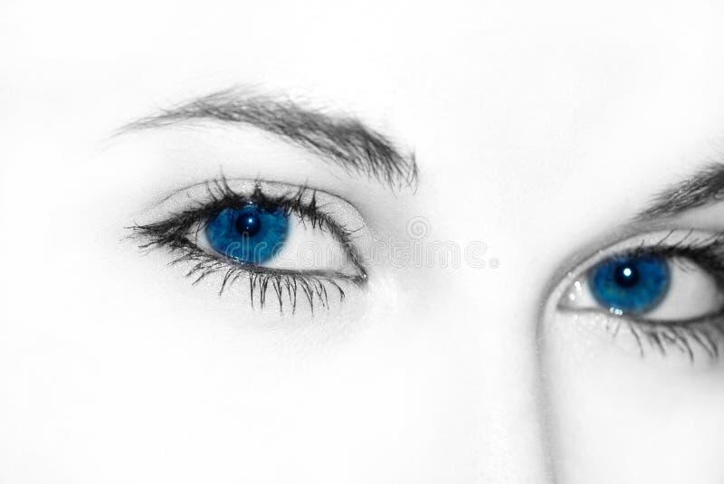 niebieskie oczy obraz royalty free