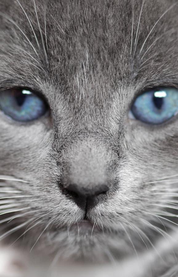 niebieskie oczy zdjęcia stock