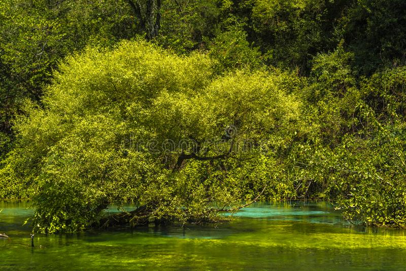 Niebieskie oko wiosny garnek «Syri ja Kalter «z zielonym drzewem w zieleni wodzie z turkusowym punktem, Albania fotografia royalty free