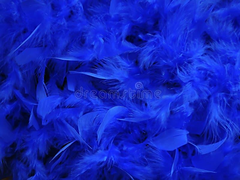 Niebieskie Pióra Fotografia Royalty Free