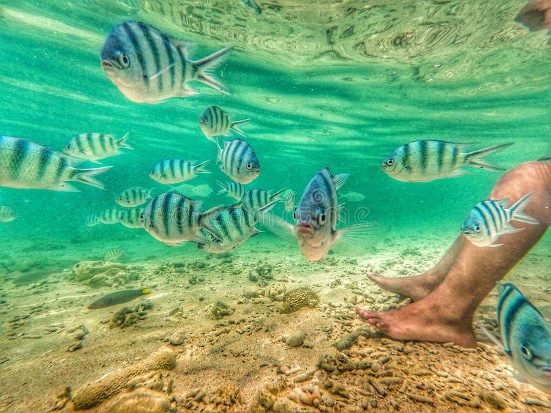 niebieskie ryb obraz royalty free