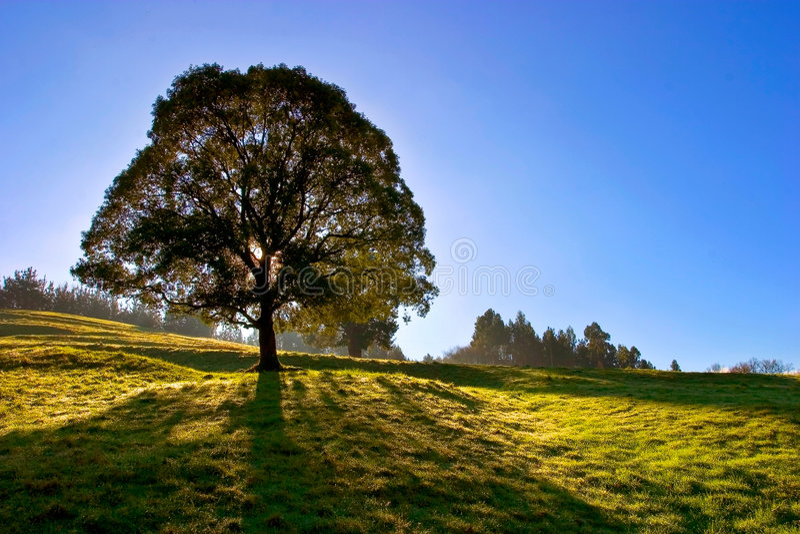 niebieskiego nieba samotne drzewo zdjęcia royalty free