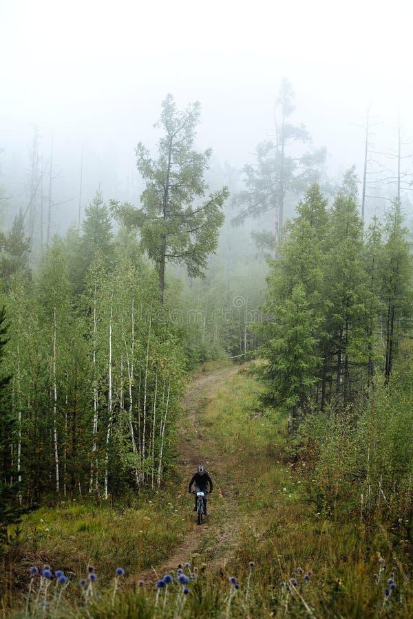 Niebla biking de la montaña en bosque imagen de archivo