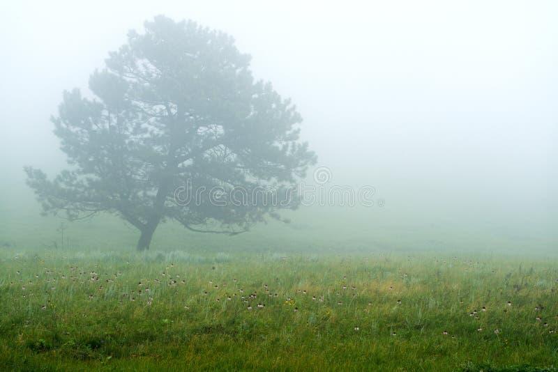 Niebla Black Hills Dakota del Sur fotografía de archivo libre de regalías
