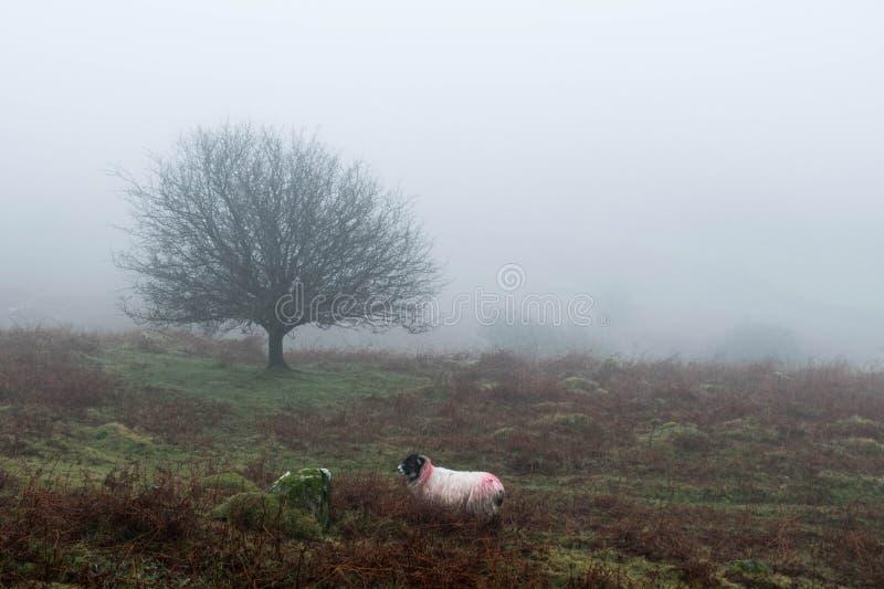 Niebla de Dartmoor fotos de archivo