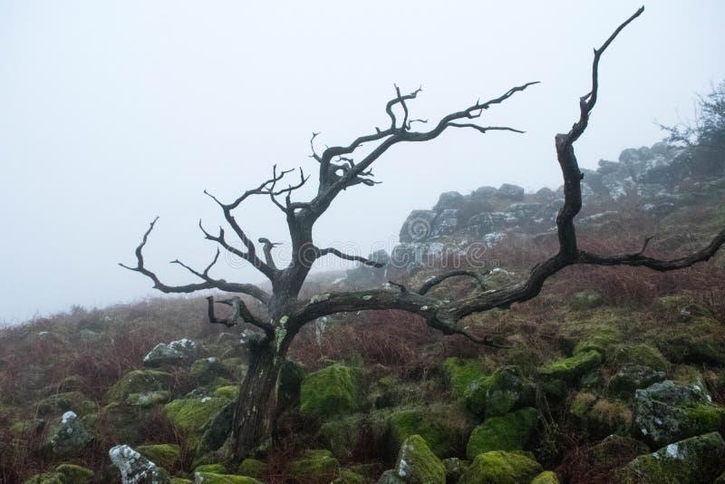 Niebla de Dartmoor imagenes de archivo
