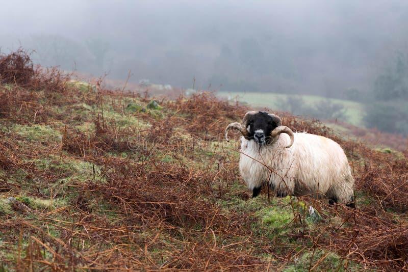 Niebla de Dartmoor foto de archivo libre de regalías