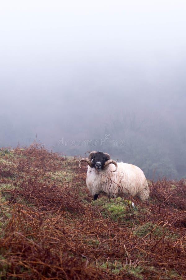Niebla de Dartmoor fotografía de archivo libre de regalías