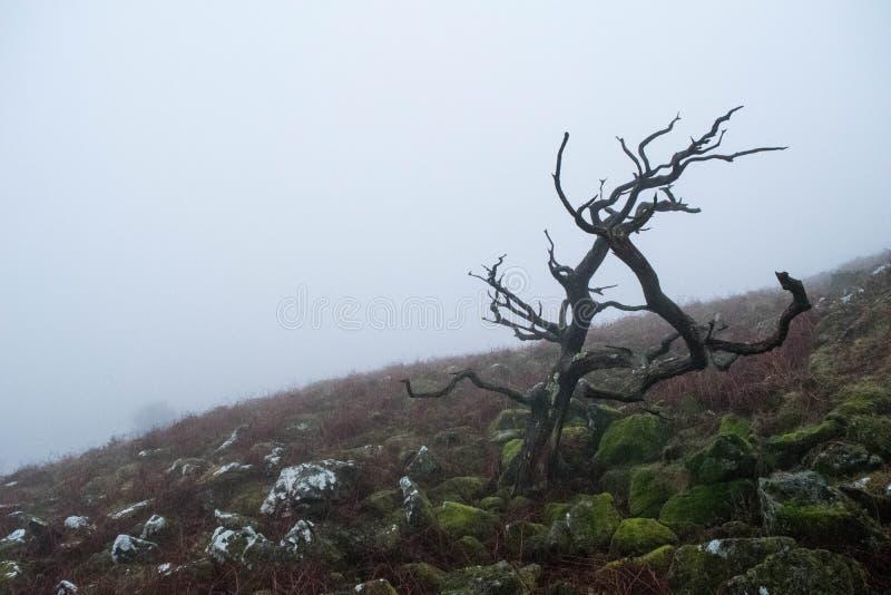 Niebla de Dartmoor fotos de archivo libres de regalías