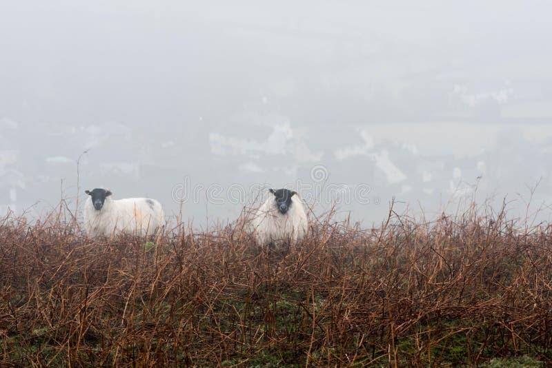 Niebla de Dartmoor foto de archivo