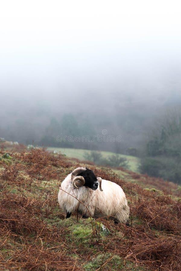 Niebla de Dartmoor imagen de archivo libre de regalías