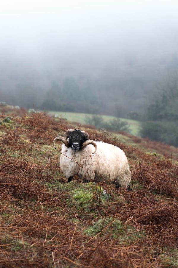 Niebla de Dartmoor imagen de archivo