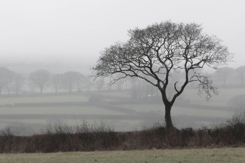 Niebla de Dartmoor fotografía de archivo