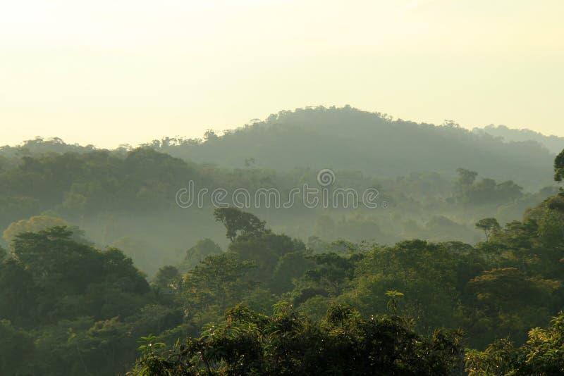 Niebla de la mañana de la selva tropical imagenes de archivo