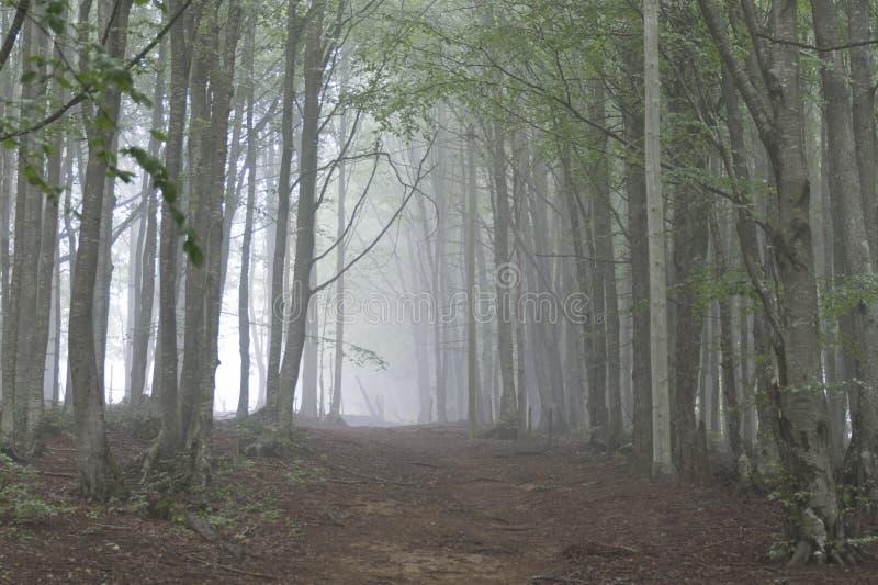 Niebla de la mañana en el bosque imagenes de archivo