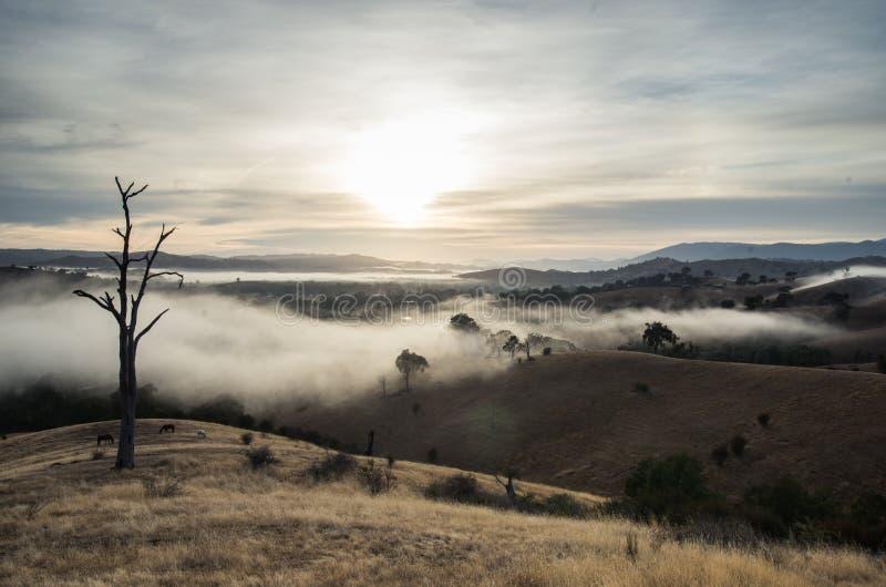 Niebla de la mañana en Goulburn River Valley en Victoria, Australia fotografía de archivo