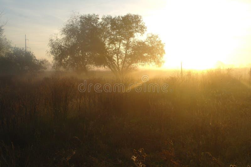 Niebla de la mañana en la naturaleza del otoño, luz anaranjada de la salida del sol en fondo foto de archivo libre de regalías