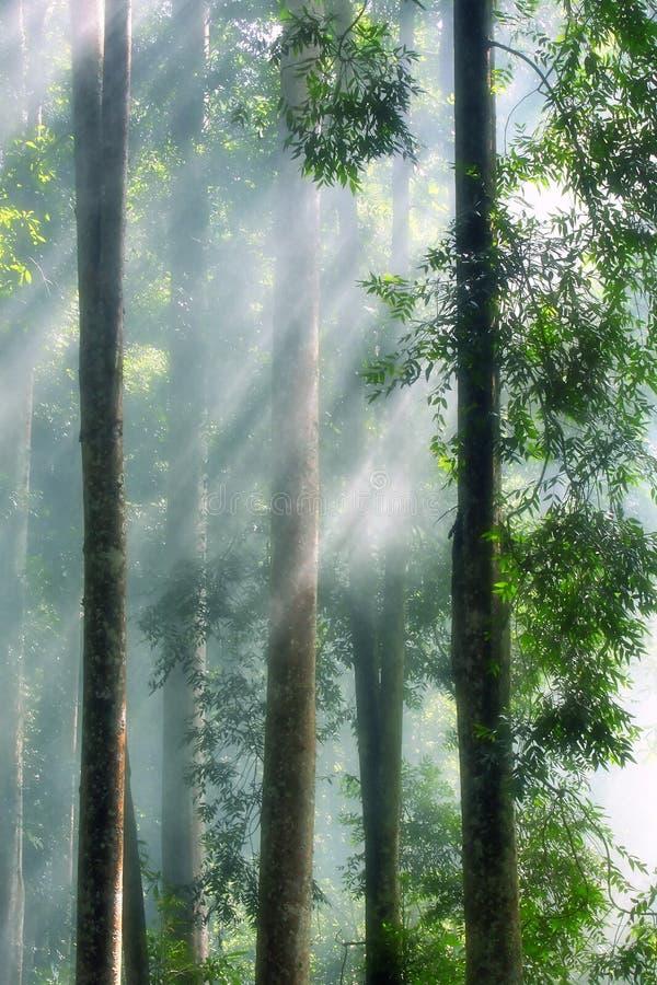 Niebla de la mañana en la selva tropical imagenes de archivo