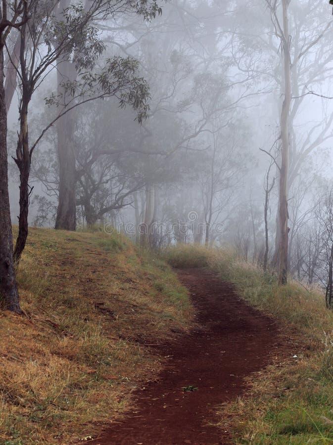 Niebla de la mañana a lo largo de una trayectoria de la suciedad imagenes de archivo