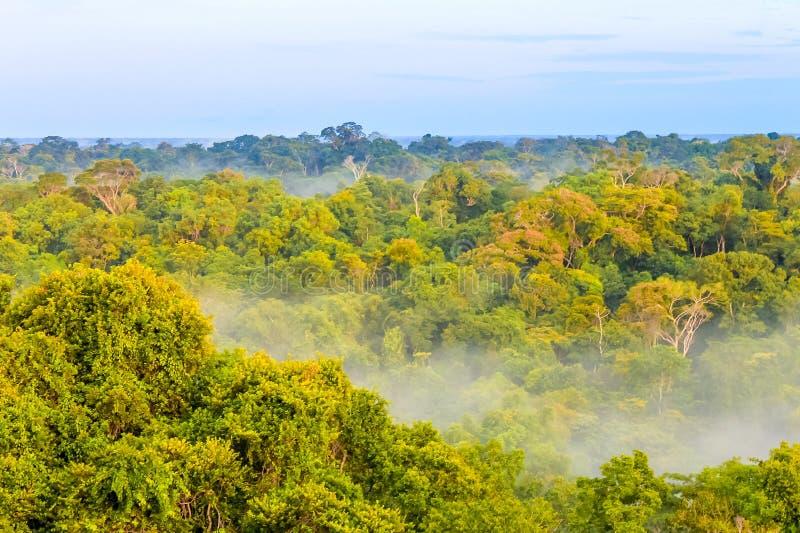 Niebla de la mañana sobre la selva tropical brasileña en el Brasil fotografía de archivo