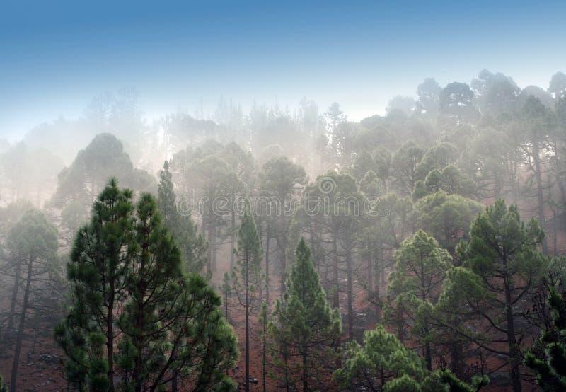 Niebla de la montaña fotos de archivo libres de regalías