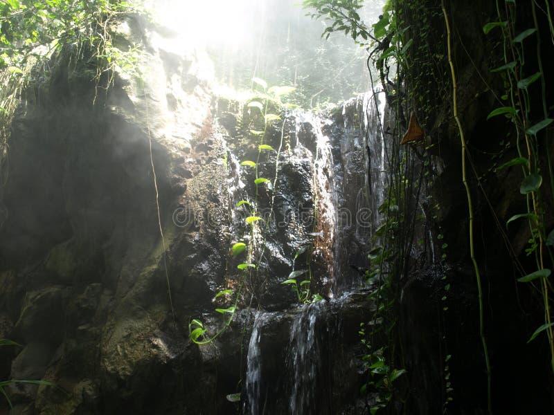 Niebla de la selva tropical fotos de archivo