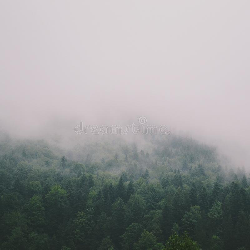 Niebla de los bosques de las montañas foto de archivo